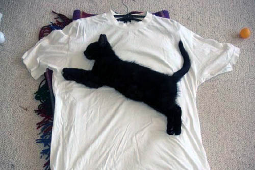 Exposition de minoux meow meow Puma-shirt